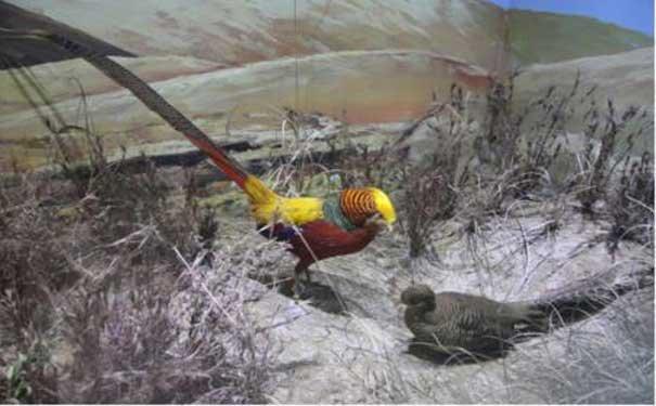 棕榈凤头鹦鹉繁殖期间饲养知识介绍