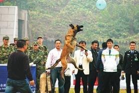 怎么让狗狗接飞碟?狗狗接飞碟的训练方法